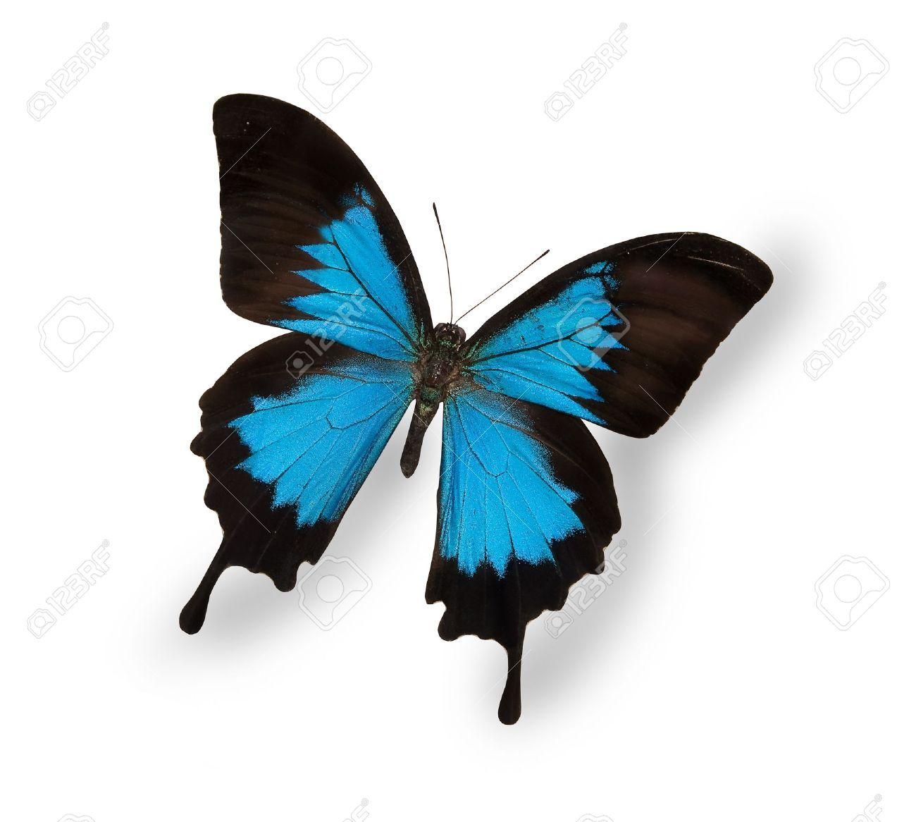 白で隔離される青い蝶 の写真素...
