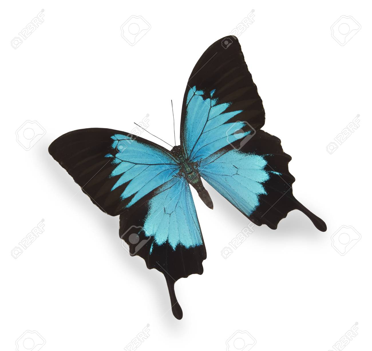Blue butterfly isolated on white Stock Photo - 10787768