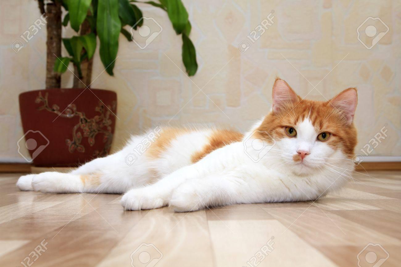 How do you get rid of tom cat smell
