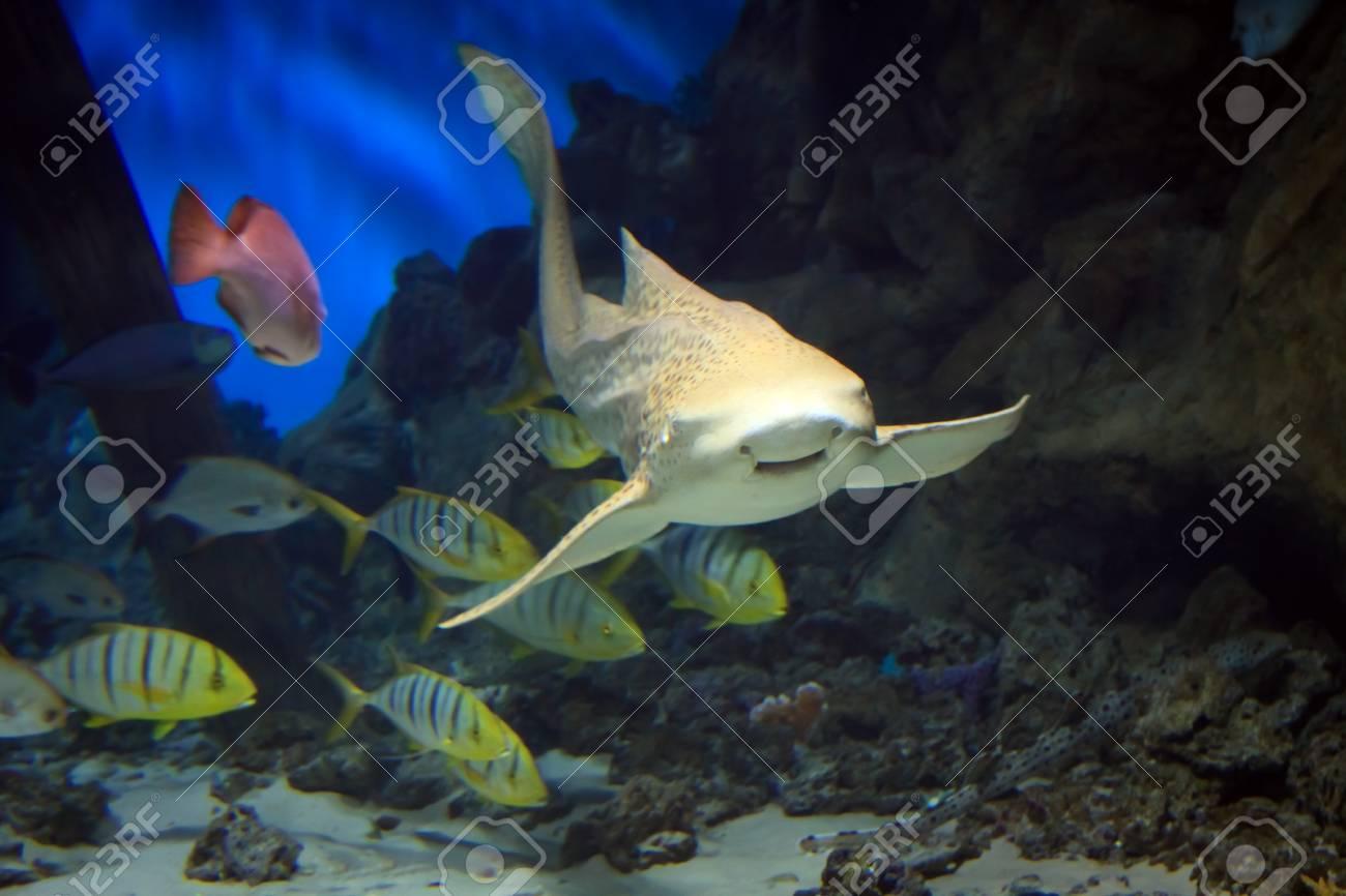 shark swimming along underwater Stock Photo - 16482815