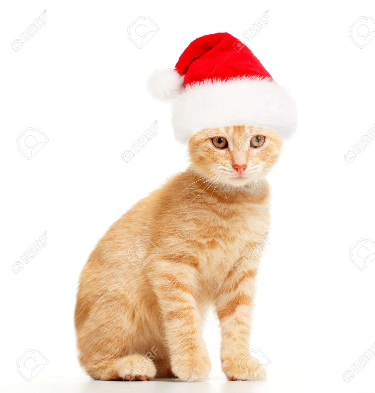 santa cat stock photo picture and royalty free image image 10757174