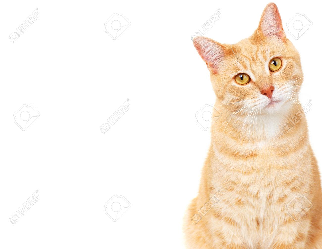 Pet cat Stock Photo - 17315873