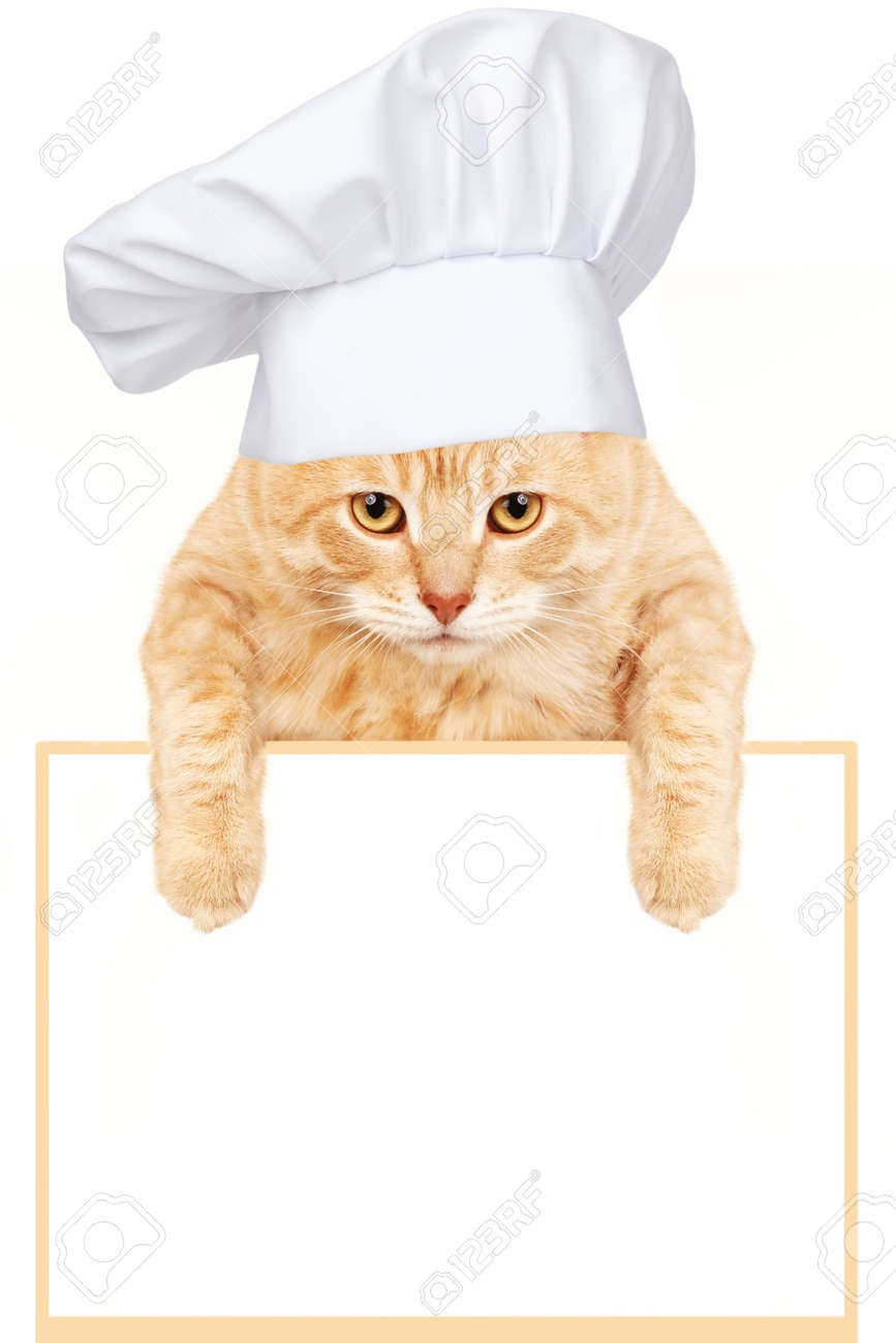 Cat chef with banner Stock Photo - 17315879