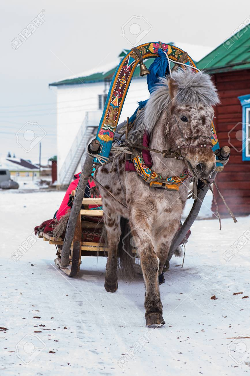 horse pulling sleigh in winter mongolia stock photo picture and