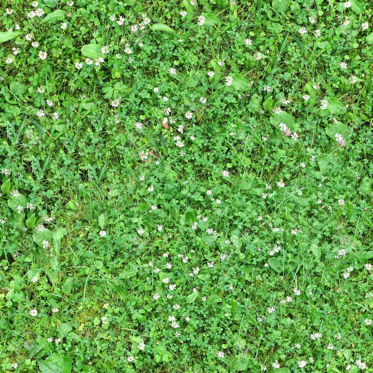 Seamless green grass background with clover leaves and small pink flowers Stock Photo - 21426614