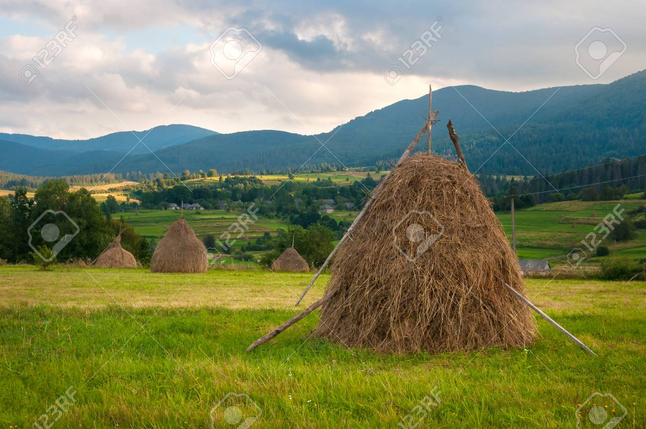 Field With Haystacks In The Sunny Day Rural Landscape Hey Rolls