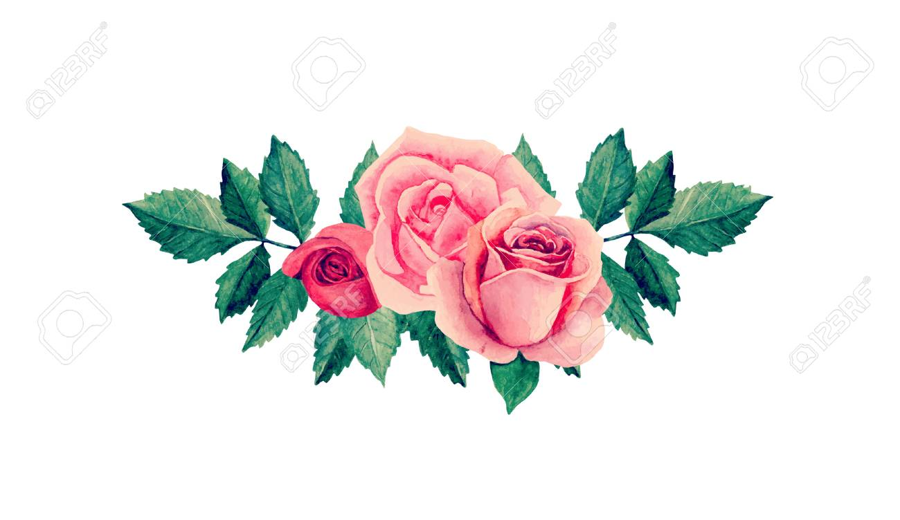 watercolor roses vector pink flowers clip art royalty free cliparts rh 123rf com roses vector art rose vector pattern