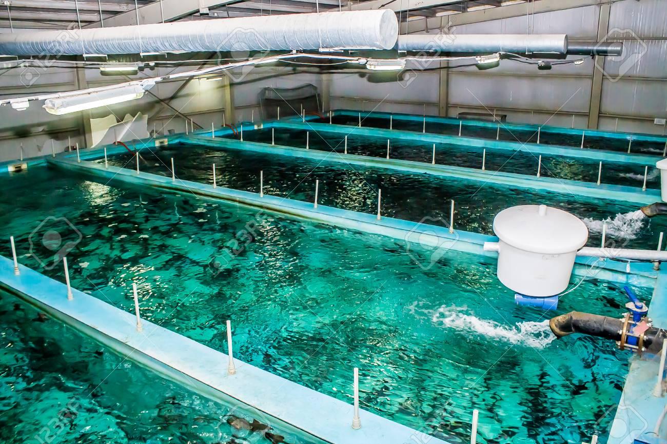 Swimming pool for fish breeding - 91197171