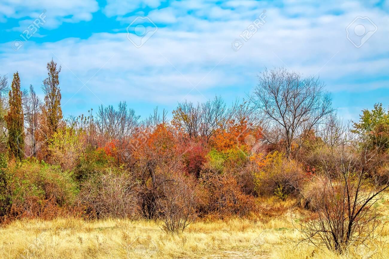 Wild autumn landscape - 123656799