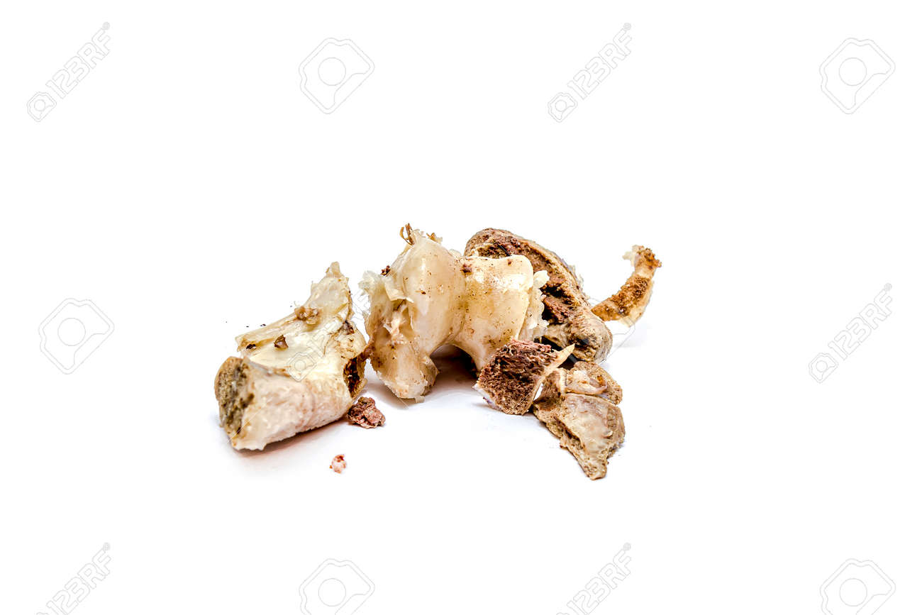 Gnawed bones of a cow on a white background. - 155722458