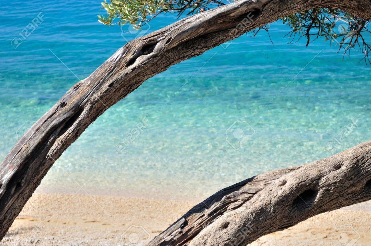 Increíble Playa Tropical Con Agua Turquesa Y Enmarcado Por árboles ...