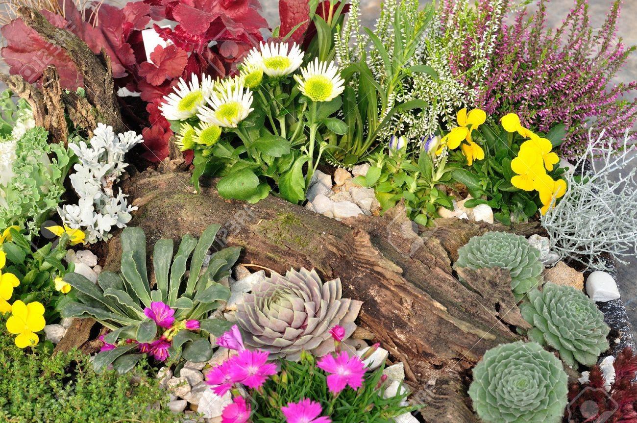 Varietà di fiori colorati in giardino foto royalty free