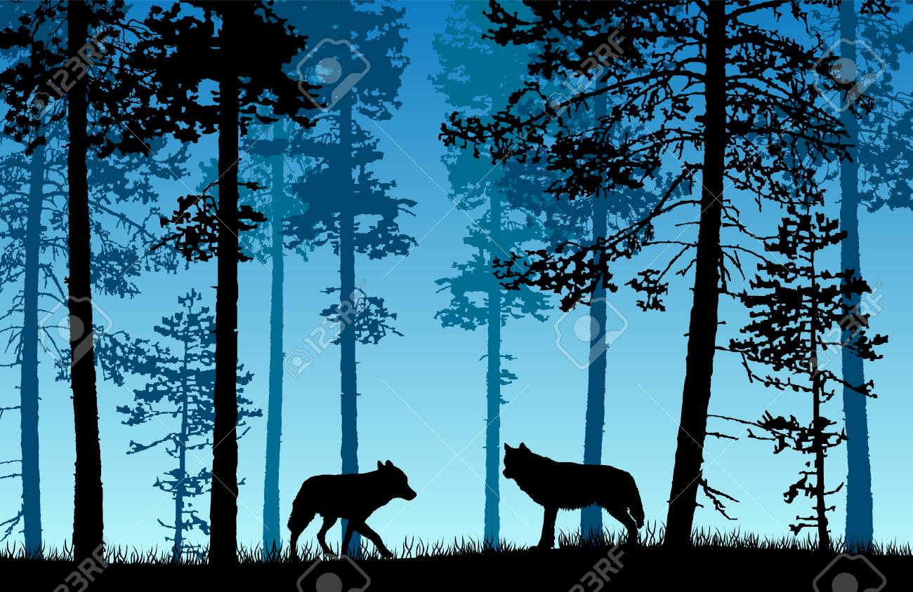 Vector landscape of two wolves in a forest with blue misty background. - 102418114