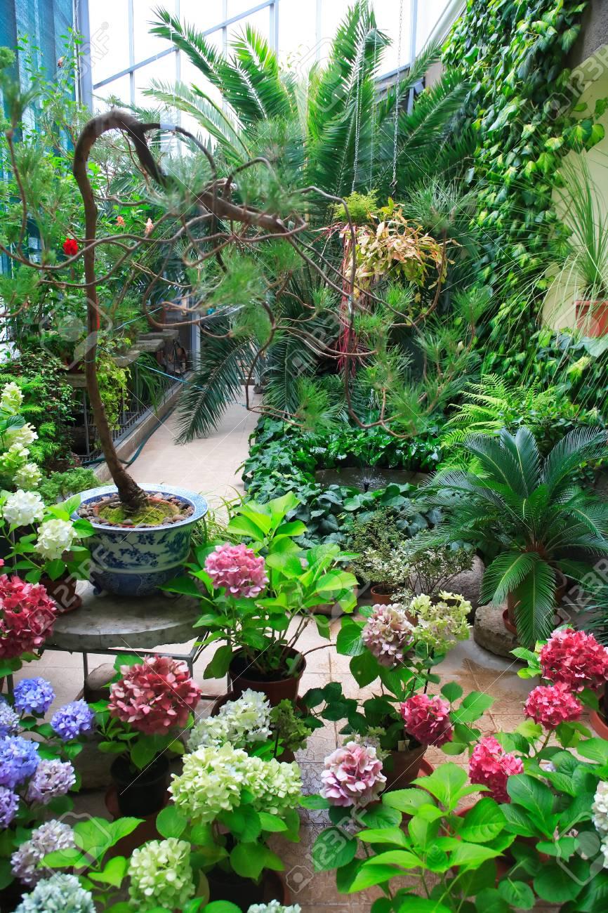 Wintergarten Blumen Kf75 Casaramonaacademy