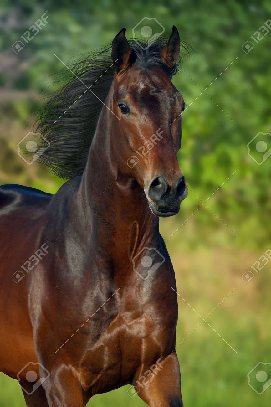 Beautiful Horse Portrait Run On Green Background Stock Photo Picture And Royalty Free Image Image 66002223