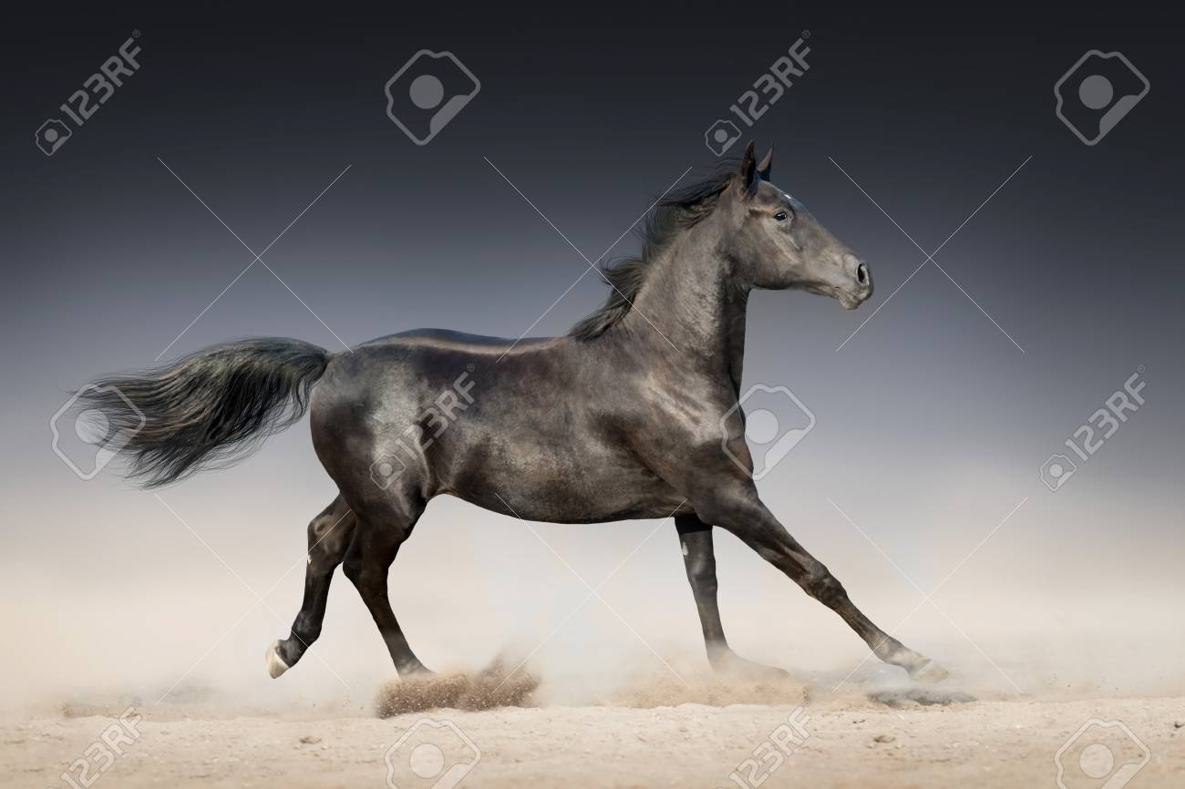 Black Horse Run In Desert On Dark Background Stock Photo Picture And Royalty Free Image Image 71326528