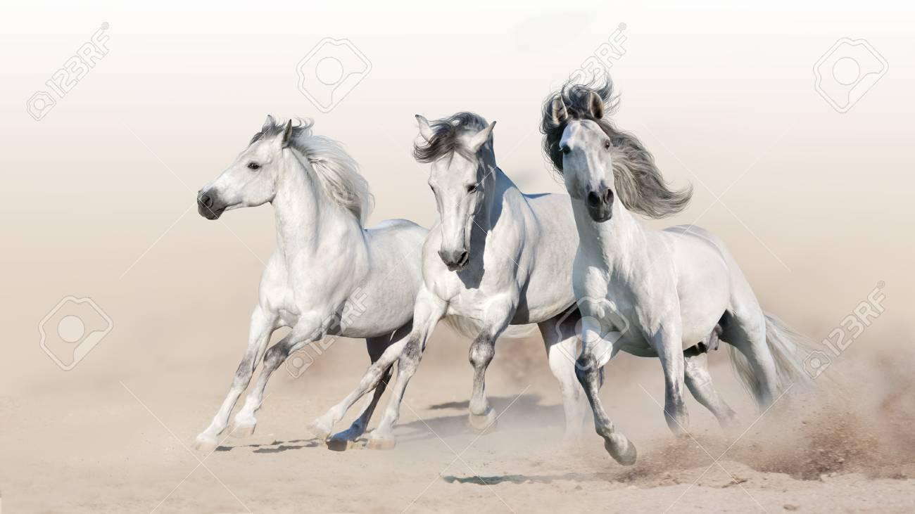 Three white horse run gallop on desert dust - 126638154