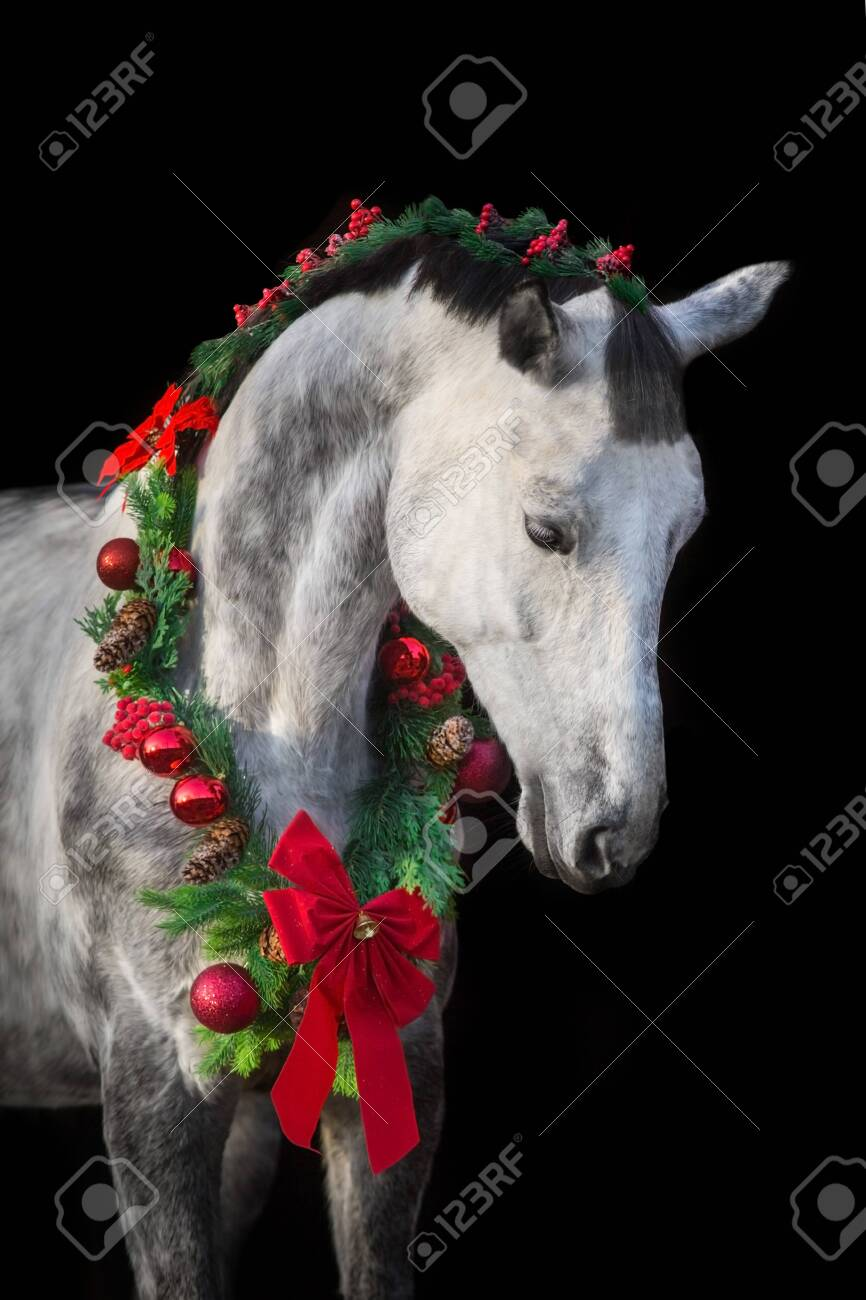 White Horse In Christmas Wreath New Year And Christmas Horse Stock Photo Picture And Royalty Free Image Image 135961126