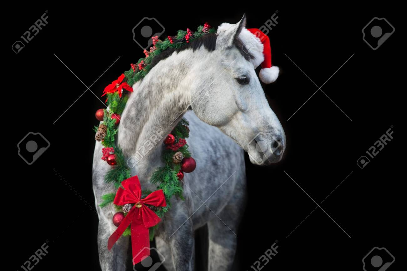 White Horse In Christmas Wreath And Red Santa Hat New Year And Stock Photo Picture And Royalty Free Image Image 136513880