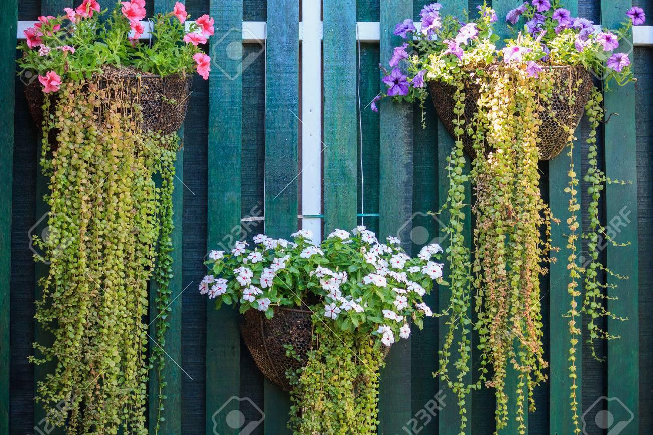 Belle Jardiniere De Fleurs Suspendues Contre Un Mur De Fond En Bois