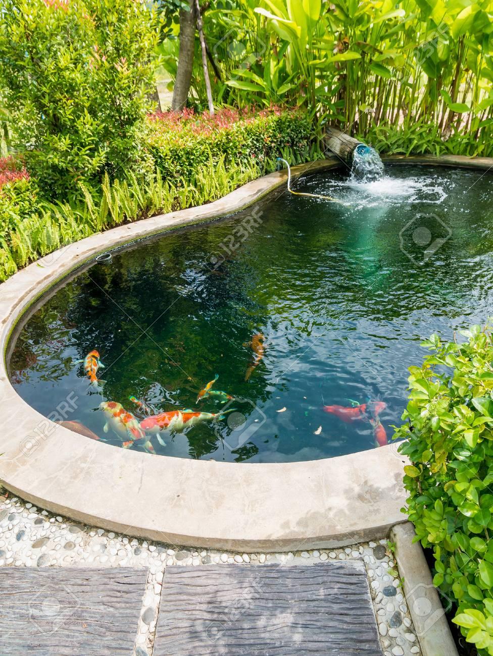 Pescado Carpa Koi De Lujo En Estanque En El Jardin Fotos Retratos - Jardin-con-estanque