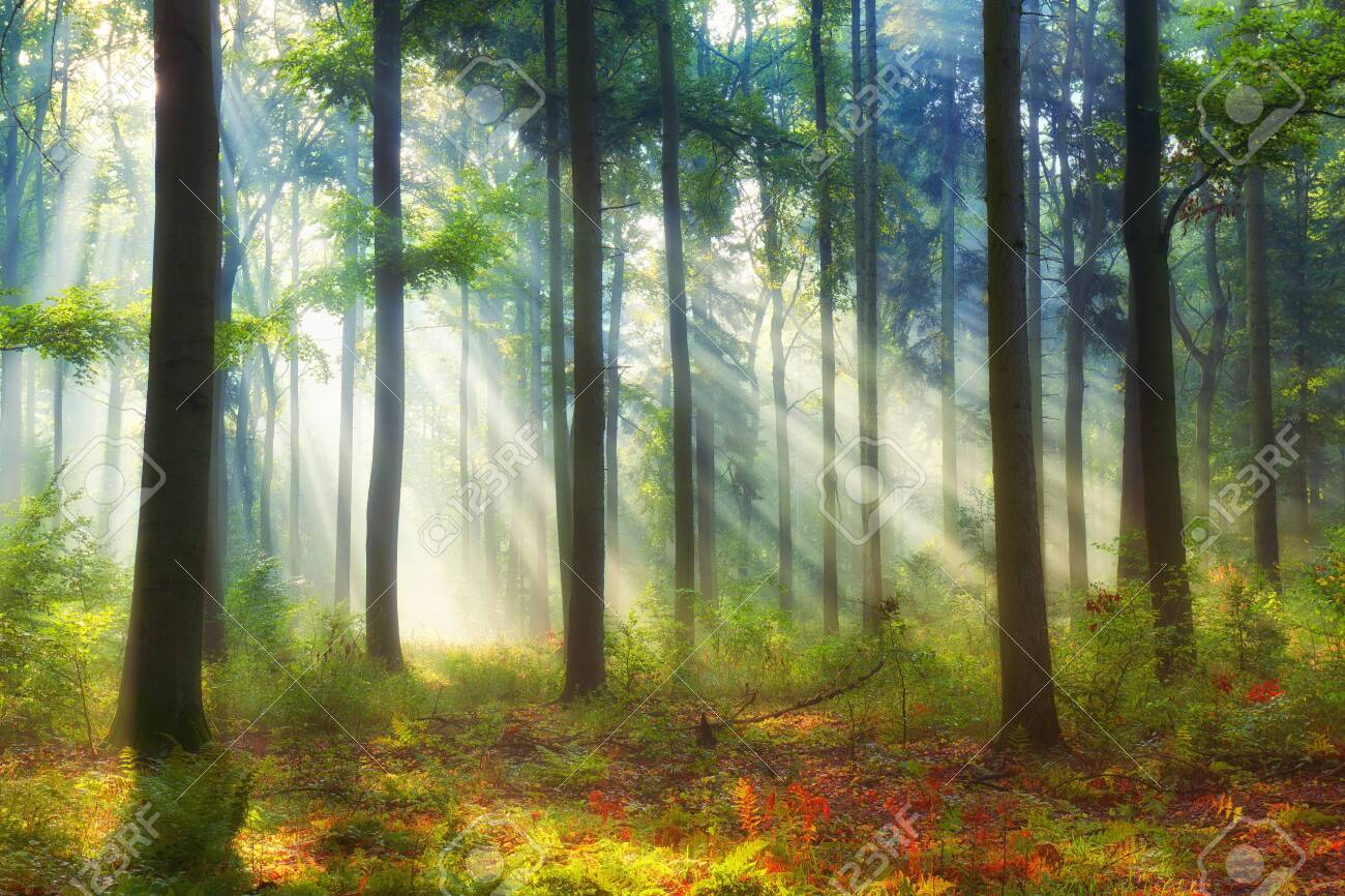 Beautiful morning in the forest - 131630393