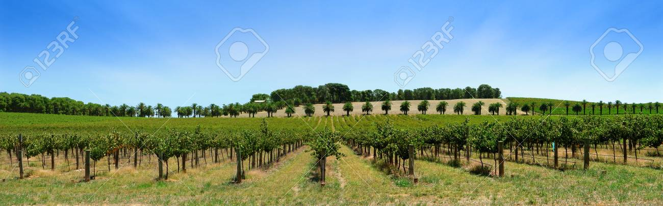 Winery in the Barossa Valley Stock Photo - 772371