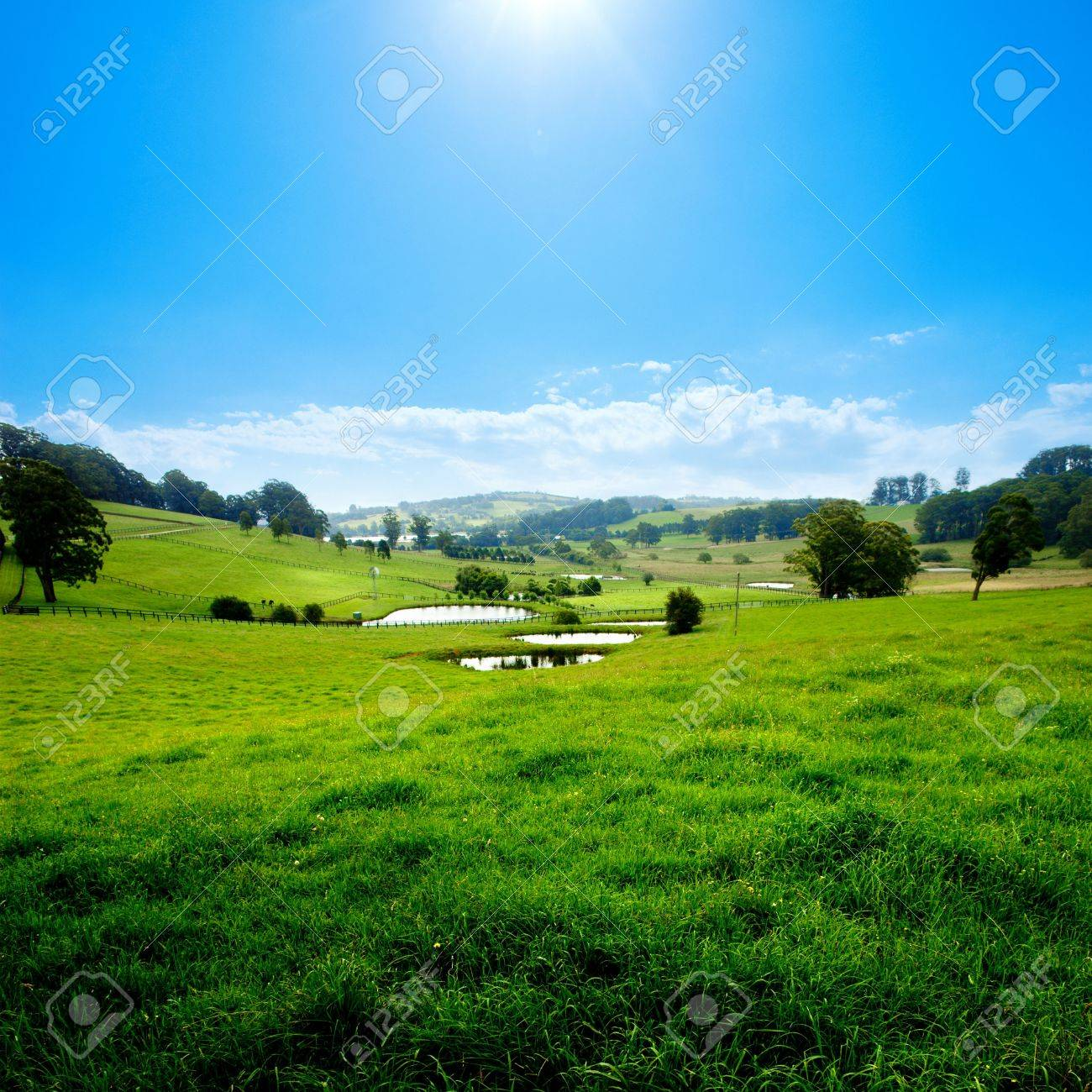 Gorgeous Rural Meadow on a summer day Stock Photo - 2682552