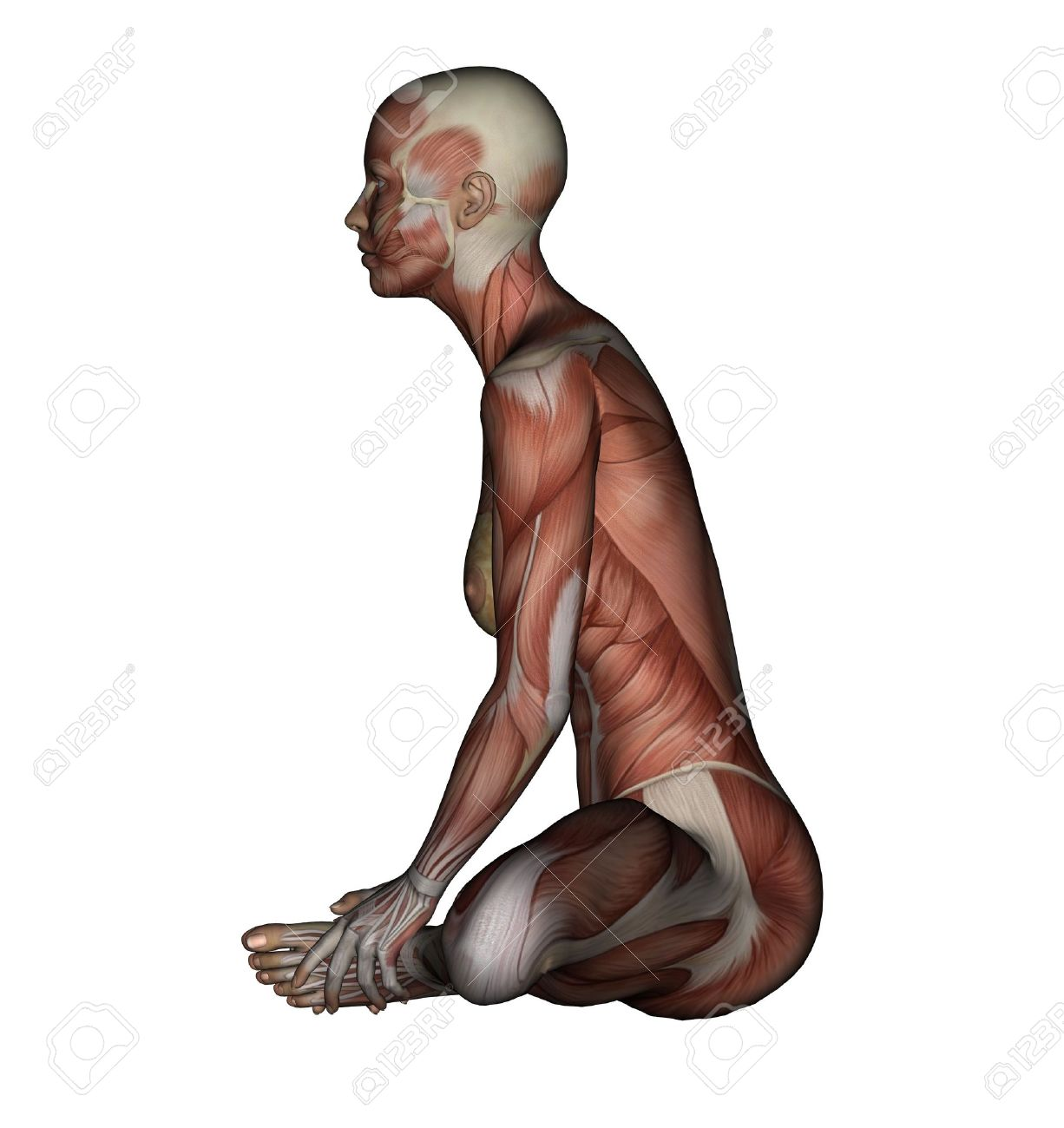 Yoga - Bound Angle Pose. Female Muscles - Side View Stock Photo ...