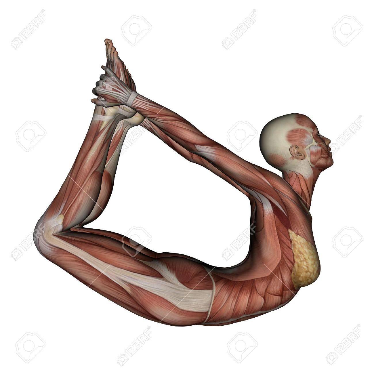 Side View Anatomy Side View Anatomy Body