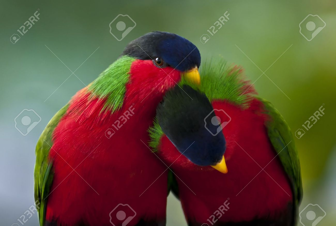 Two little birds in the love game Stock Photo - 10466014