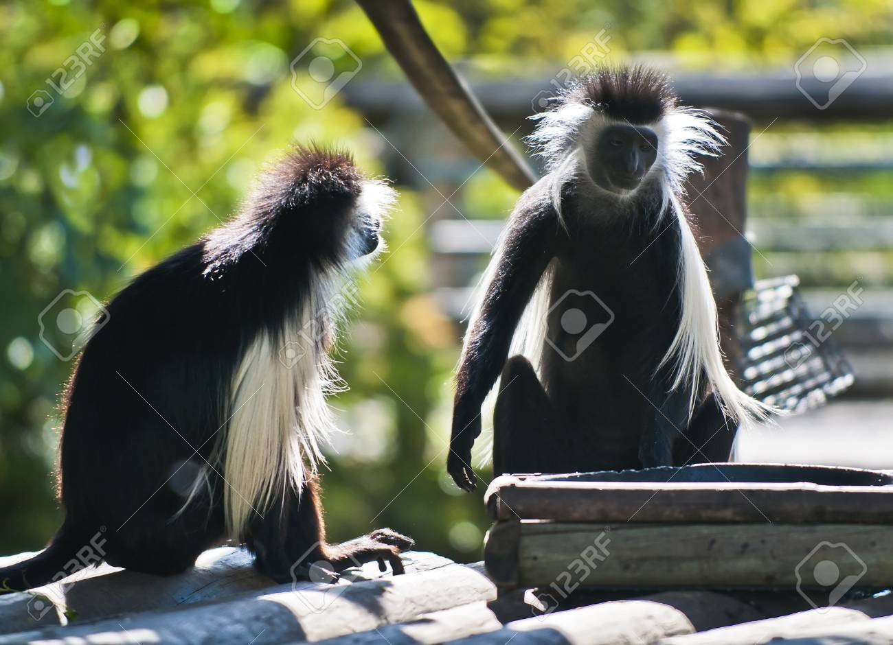 Two Black Monkeys Stock Photo Two Black And