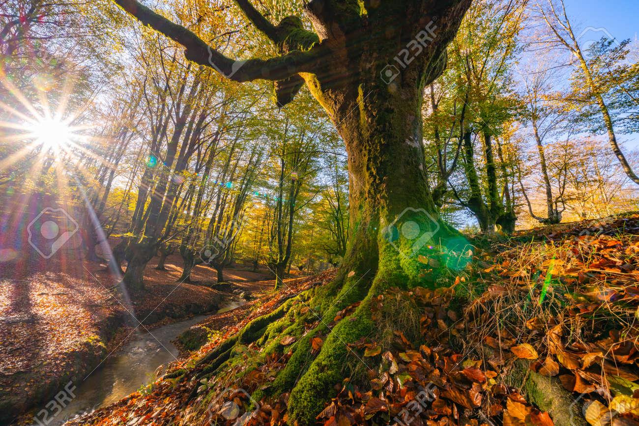 Colorful autumn at Otzarreta forest in gorbea natural park, Spain - 168320693