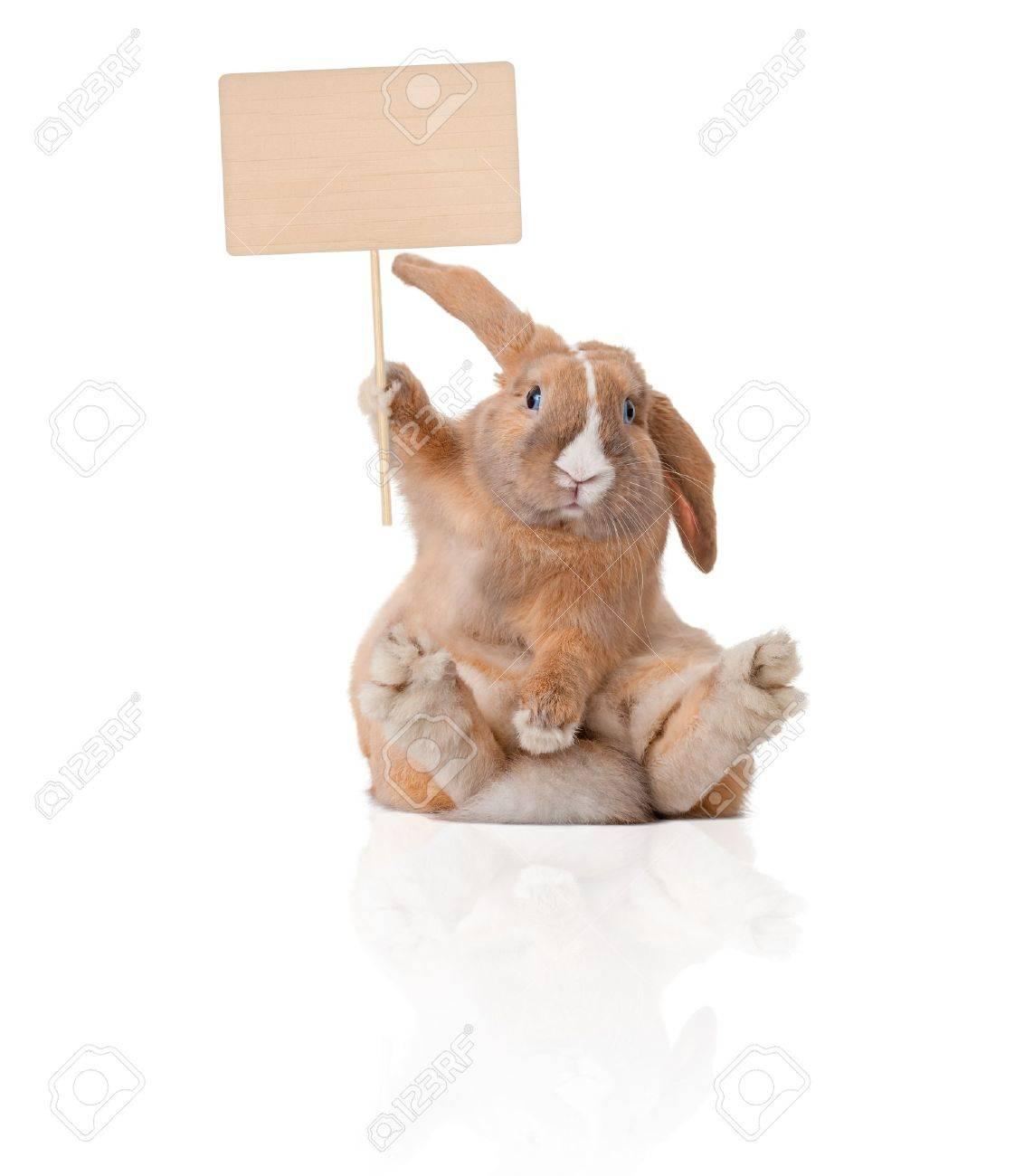 Lapin mignon et beau salon. Inscription dans sa patte sur la tête. Isolé sur fond, reflet blanc, beaucoup d'espace copie. Banque d'images - 14820887