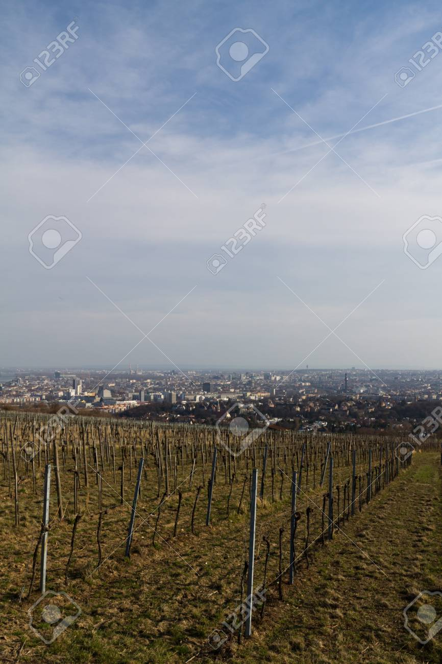A vinyard in spring close to Vienna, Austria Stock Photo - 12898147