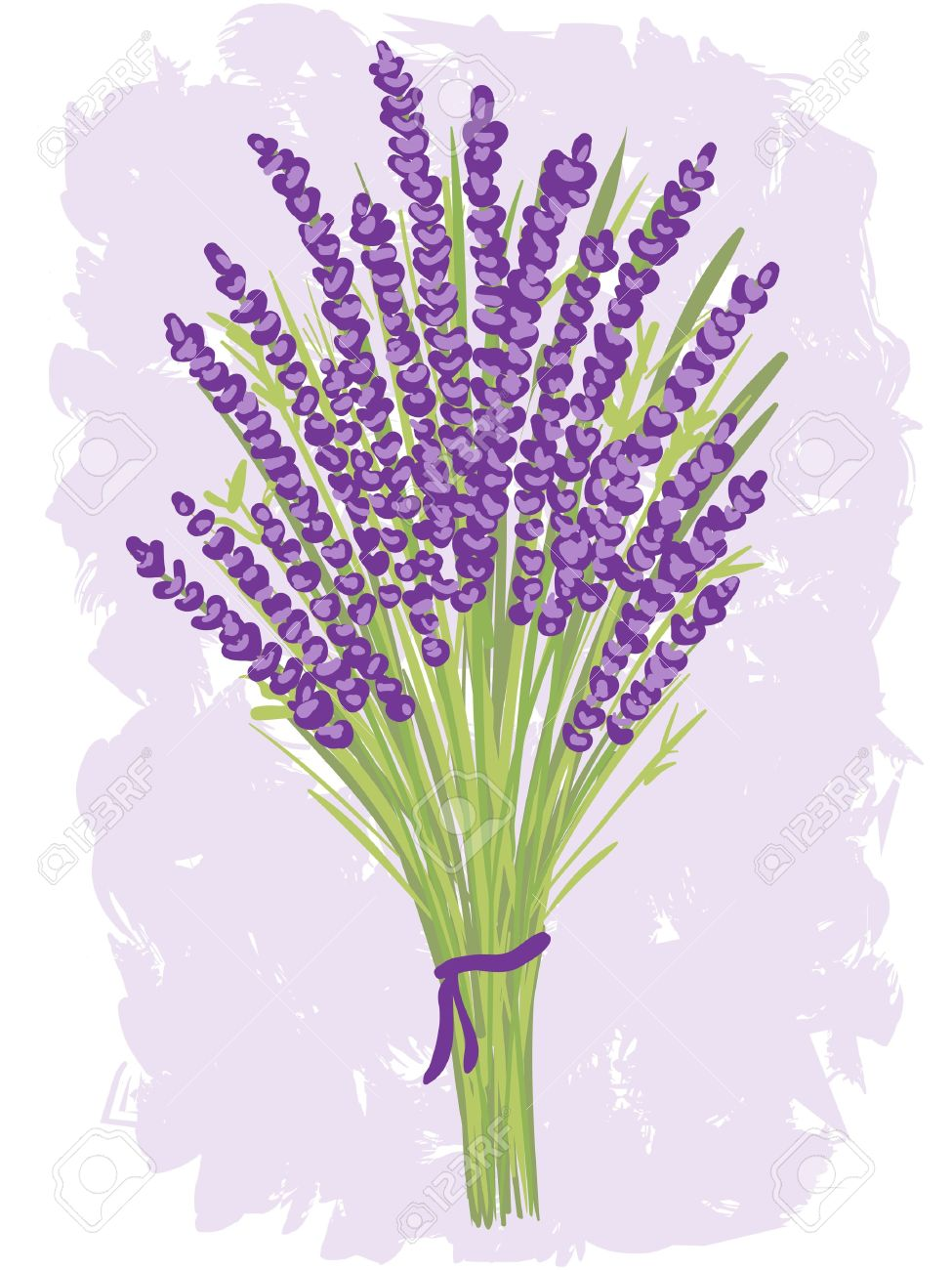 Illustration Of Lavender Bouquet On Watercolor Background Royalty Free Cliparts Vectors And Stock Illustration Image 15196659