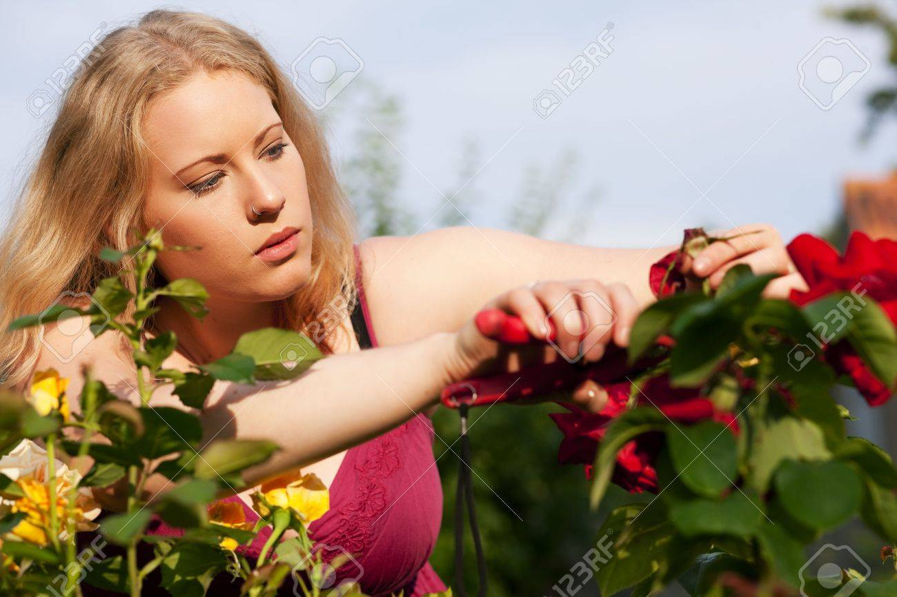 Woman doing garden work cutting the roses at beautifully sunny day Stock Photo - 6133613