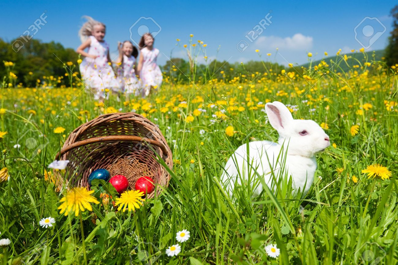 easter bunny on a beautiful spring meadow with dandelions in
