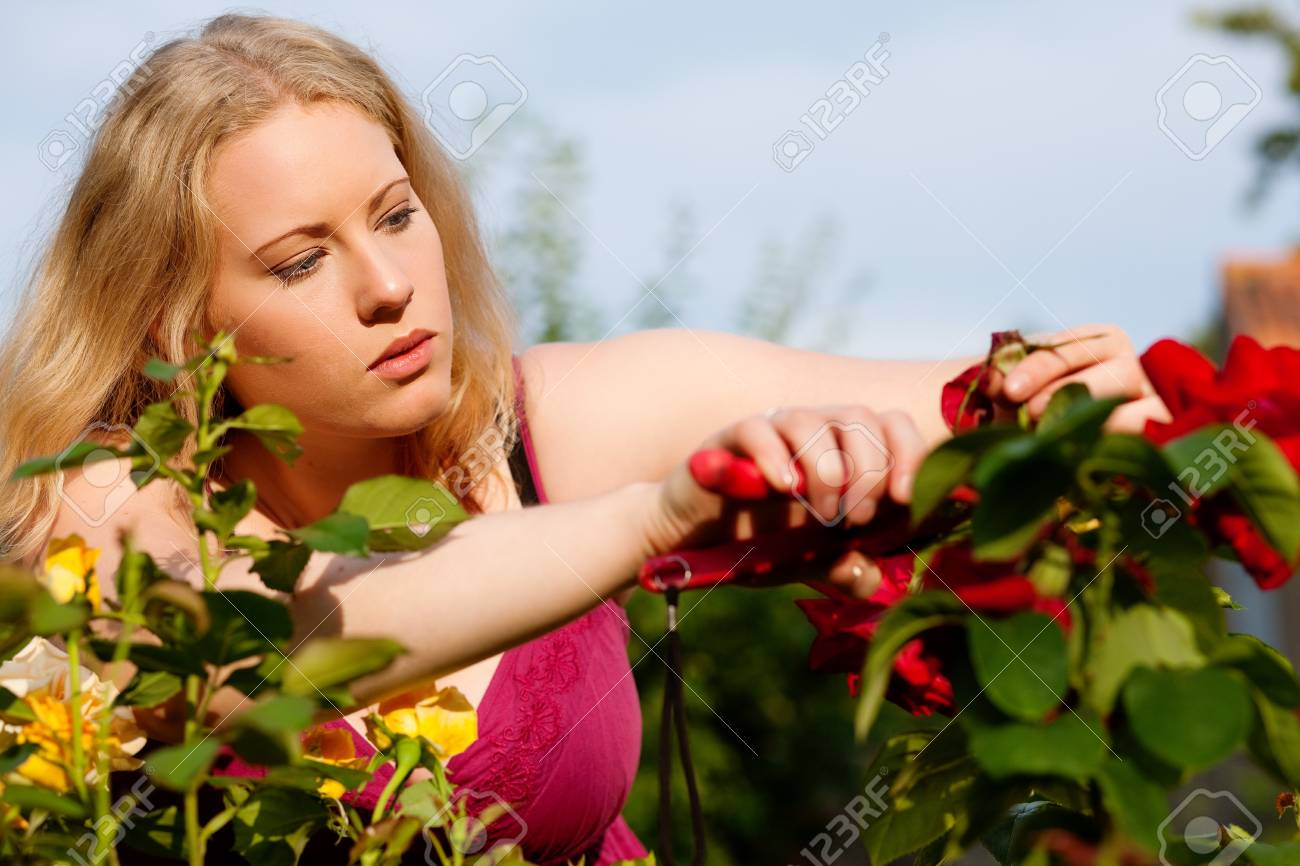 Woman doing garden work cutting the roses at beautifully sunny day Stock Photo - 17743387