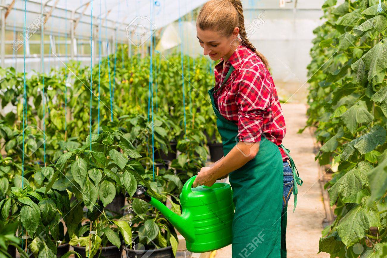 Female Gardener At Market Gardening Or Nursery With Apron Watering  Vegetables Or Plants Stock Photo
