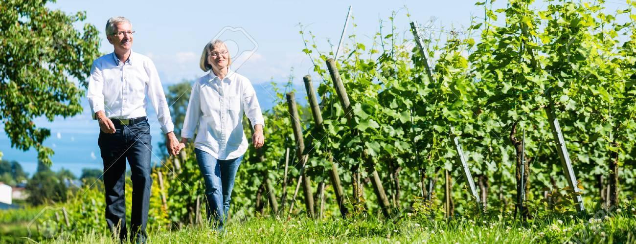 Senior couple, woman and man, having walk in vineyard - 67103160