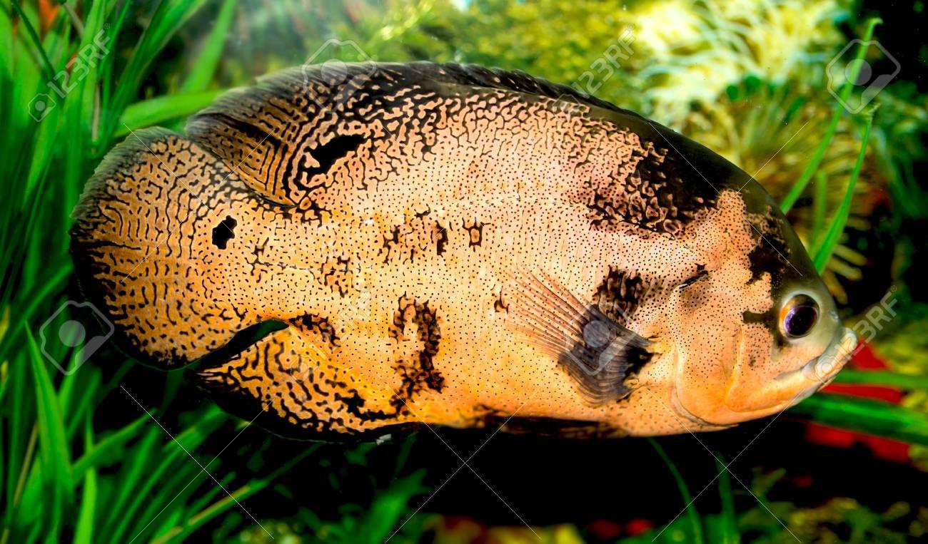 fish in the aquarium Stock Photo - 17771005