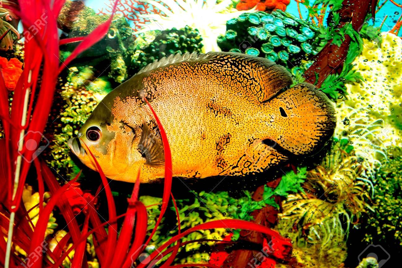 fish in the aquarium Stock Photo - 17860402