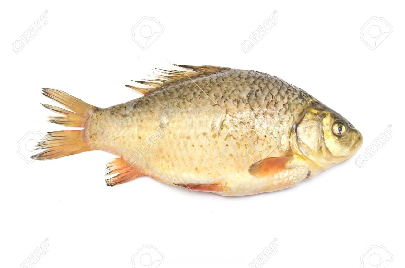 carp fish Stock Photo - 18462808