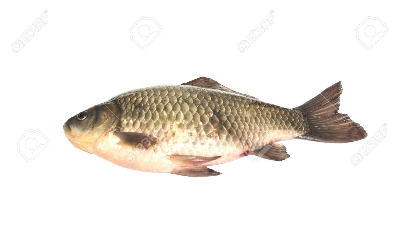 carp fish Stock Photo - 18462695