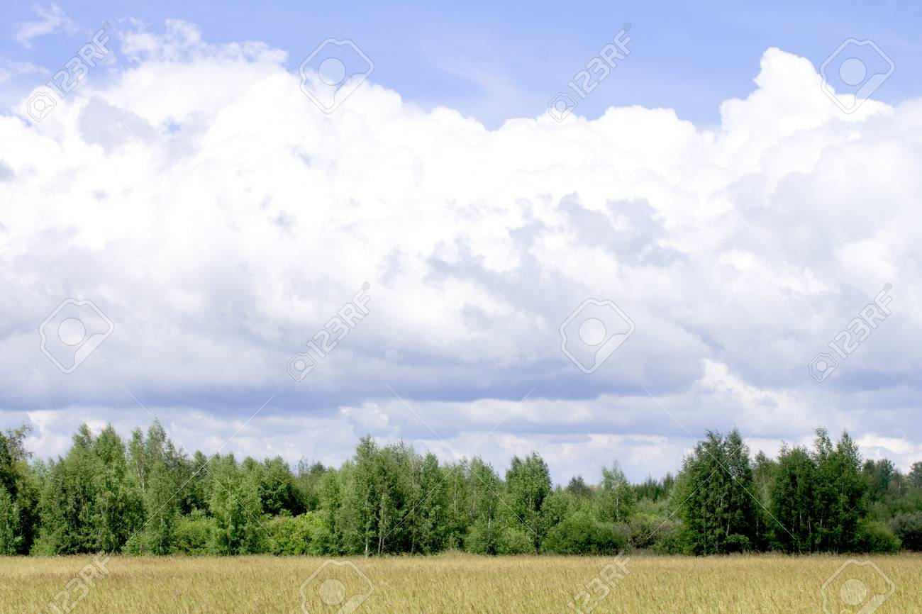 the view of Charming nature, and a lush lawn Stock Photo - 21276852
