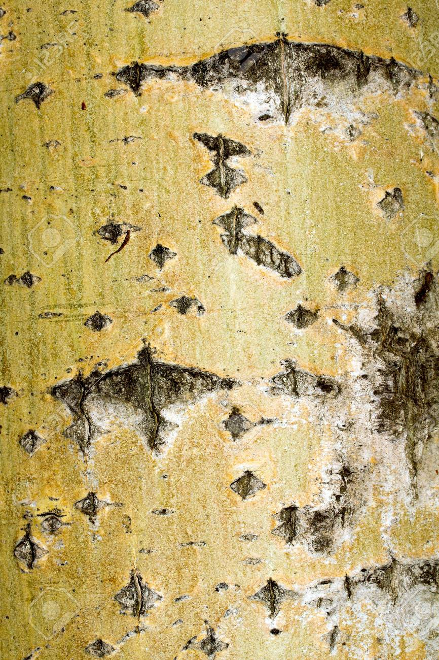 Old rough tree bark background texture Stock Photo - 21905725