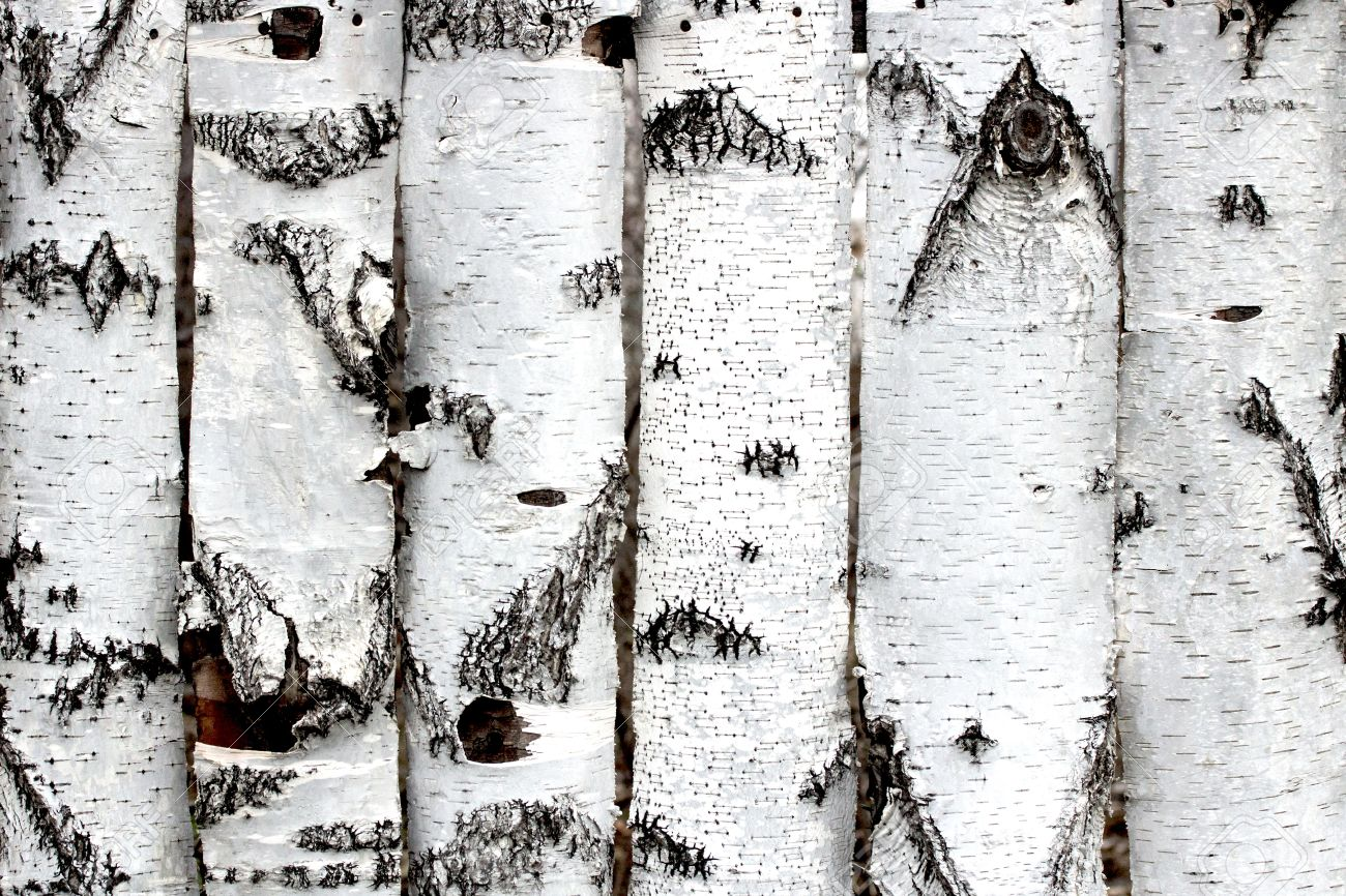 birch wood fence texture stock photo picture and royalty free image