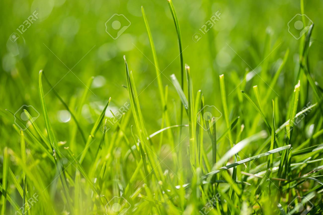 green grass with a bokeh blurred background - 120580498
