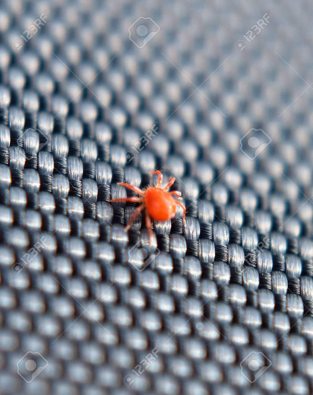 小さい クモ 赤い